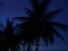 Palme bei Nacht