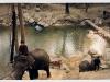 Elefant Camp