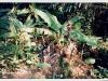 Trekking im Dschungel